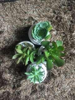 Succulent Plants 🌱