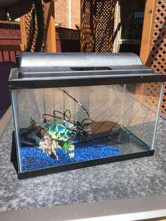 Small fish tank with accessories