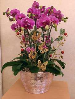 金色蘭花大花盆