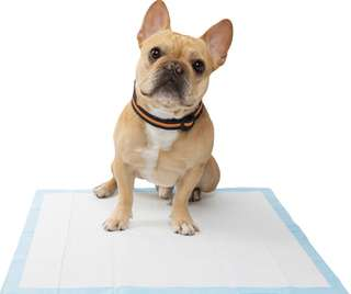 Pee Pad For Dogs & Cats