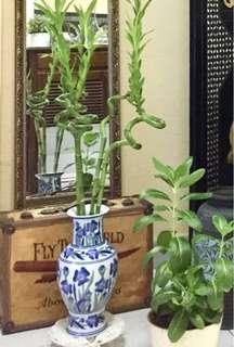 """Chinese Porcelain Vase 10"""""""
