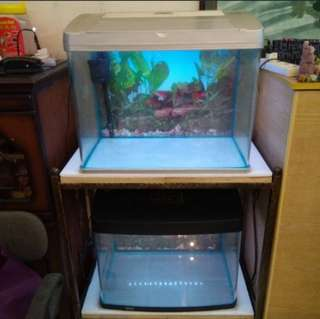 Two 2 fts Fish Tanks with 3ft Wrought Iron Stand for Sale.