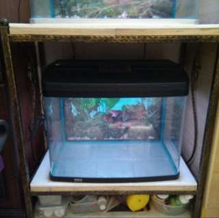 2 fts Curve Fish Tank for Sale.