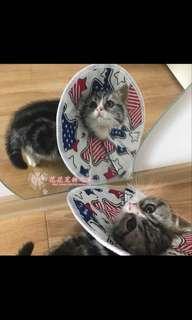 Brand new pet cat dog soft cone Elizabeth collar e-collar