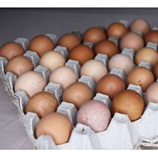Organic Eggs 30 pieces (1 tray)