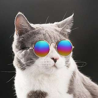 Cat / dog Sunglasses