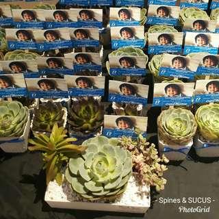 Cactus & Succulents Giveaways & Souvenirs