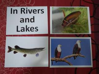 In rivers and lakes - BN Encyclopedia Flashcards