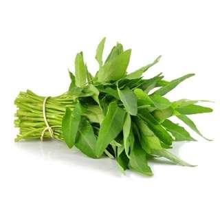 Organic Water spinach (ORGANIC KANGKONG)
