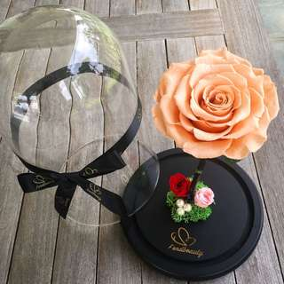 Graduation gifts / proposal gifts/ presents / preserved rose / peach / flowers / rose
