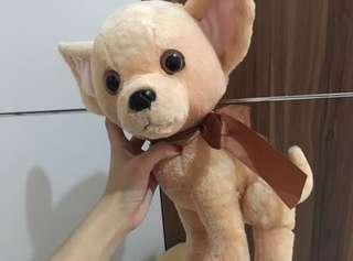 Chihuahua Doll((with tag))