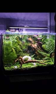 AQUASCAPE SERVICES for Tanks/Vivariums/Paludariums and more!