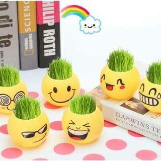 Mini Indoor Anti Radiation Pot Plants (Smiley)