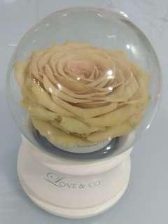 Rose musical box