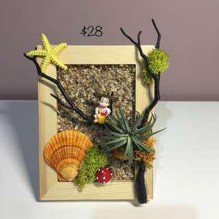 Air Plants Collection: Framed Art Air Plant Display