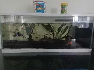 Fish Tank 60x18x25