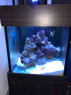 Marine Fish Tank with Stand, Sump and Hood