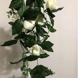 White Rose Vine (for rent)