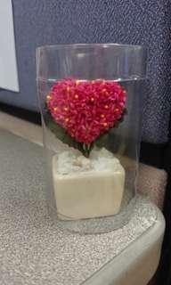 New Heart Shape Cactus (5cm)