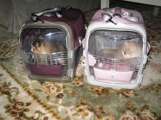 Used Cat Carrier - Voyageur by Catit Hagen