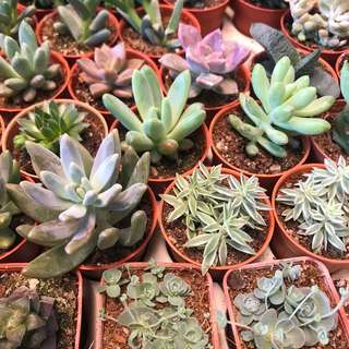 Catus and succulent wholesale