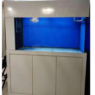 WTS 5ft x 2ft x 2ft cabinet fish tank c/w sump n lighting FOC 12inch crossback (RESERVED)