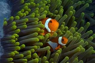 體驗潛水活動