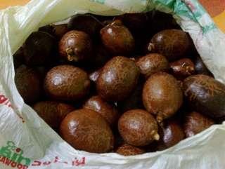 Buah Zuriat / Doum Fruit / Buah Adam Hawa