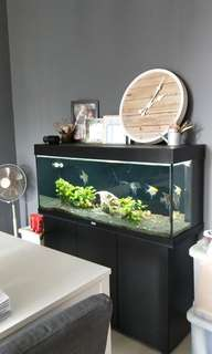 Jewel brand fish tank (4ft)