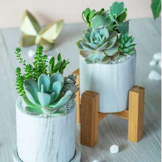 Succulents in White Marble Pot with Dish or Stand