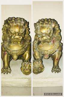 Fortune Wealthy Pair of Lion*9638 5293