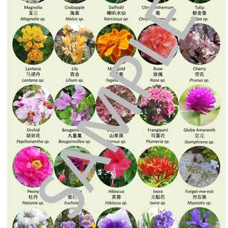 Flowers poster with English, Chinese, and scientific names, A1 size