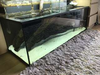 4ft by 1.5 Glass Tank