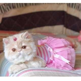 BESTSELLER!! BN Summer Collection - Pink Halter Tulle Dress/ Floral Dress