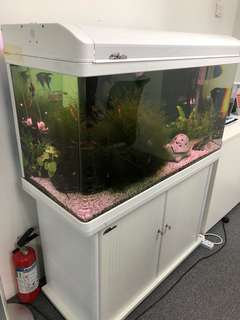 Fish tank complete with filter, lights and accessories
