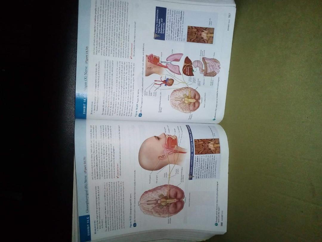 Fantastic Tortora And Derrickson Anatomy And Physiology Crest ...