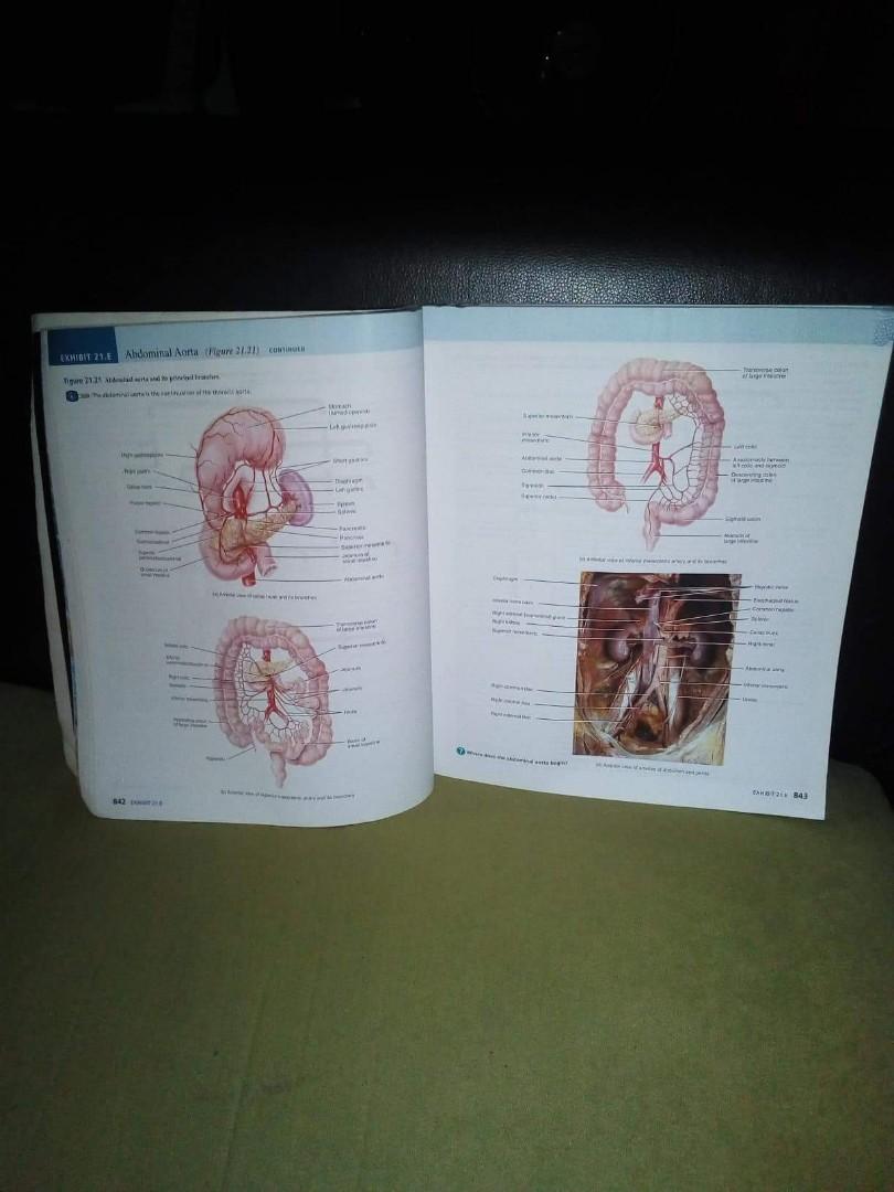 Großartig Anatomy And Physiology Tortora 13th Edition Galerie ...