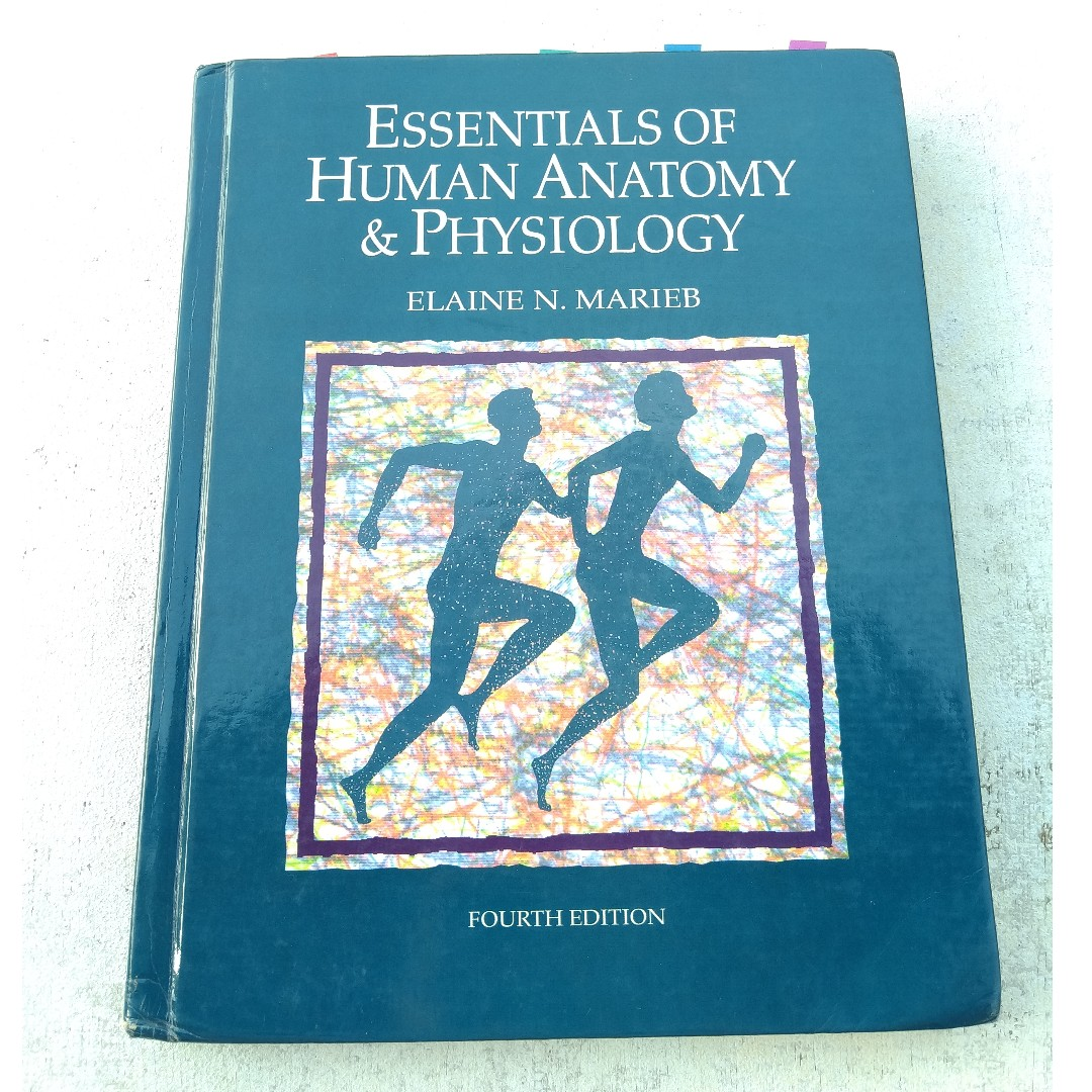 Essentials Of Human Anatomy Physiology 4th Edition By Elaine N