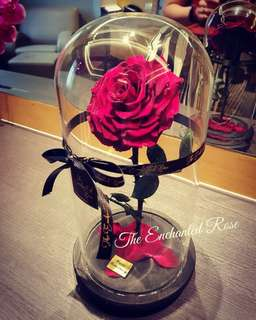 Premium Preserved Rose in Glass Dome. Beauty & the Beast Enchanted Rose