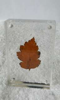 Autumn Leaf in a frame