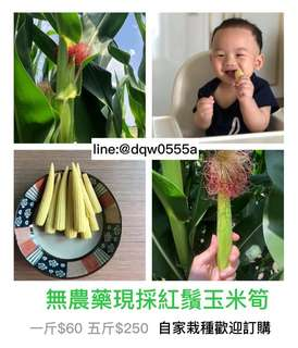 🚚 雲林媳婦_甘脆紅鬚玉米筍