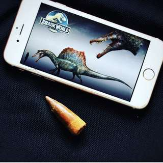 摩洛哥恐龍牙