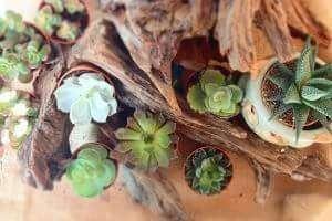 Succulent Suprise set of 8