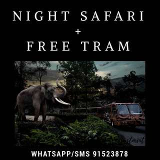Night Safari + Free Tram Rides 🐗
