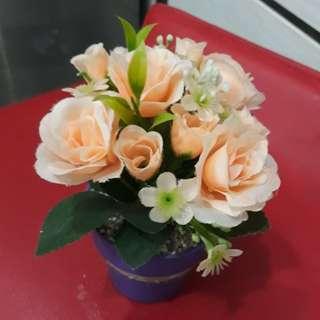 Bunga Cantiq