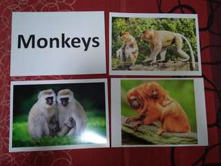 Monkeys -  BN Glenn Doman Encyclopedic flashcards