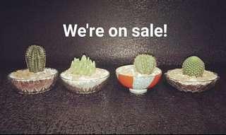 We're on sale!