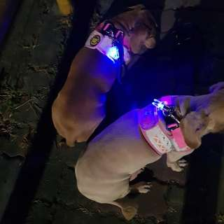 寵物夜行安全發光吊墜