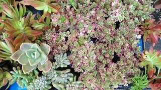 1+1 plants