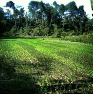 AGRICULTURAL LAND FOR SALE!